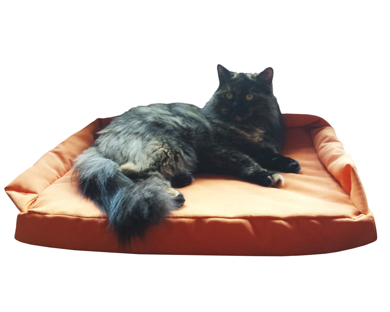 Cat Cushion made of 100% Visco Foam 50 x 40 cm